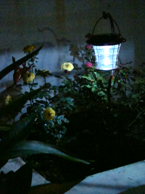 Solar Lantern during the night